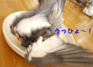 Hal1289.jpg